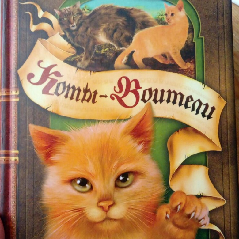 высоты картинки котов-воителей английских книг компания