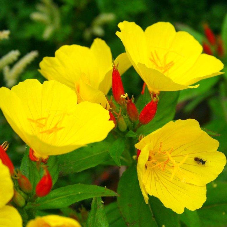 всего нам желтые цветы в саду названия и фото образом