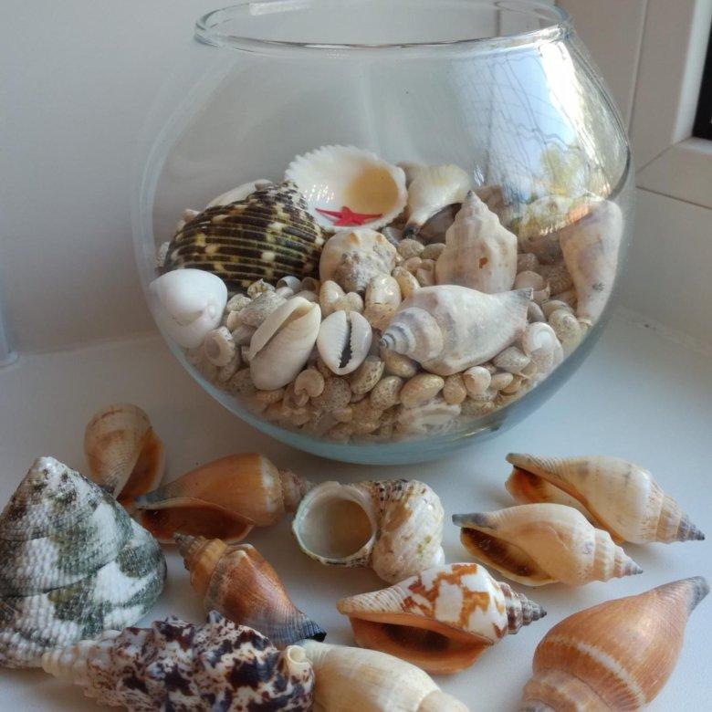 Как оформить ракушки привезенные с моря фото