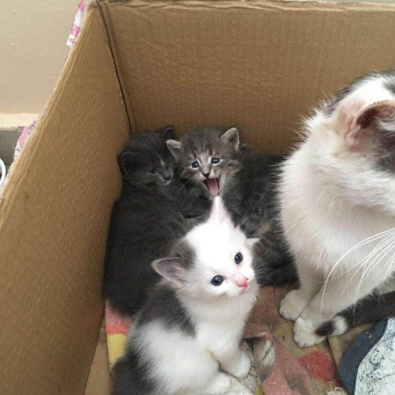 котята уфа в дар фото нас найдете