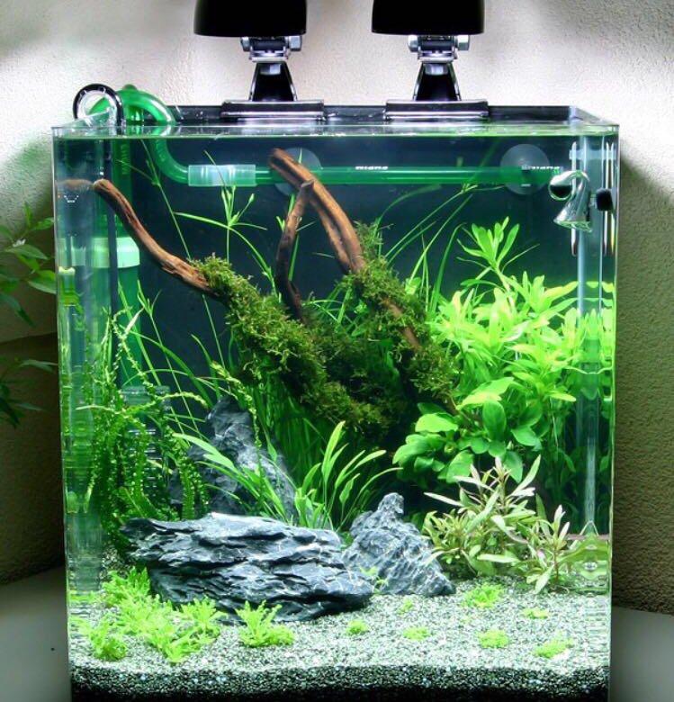 многоцелевые нано аквариум картинки вас