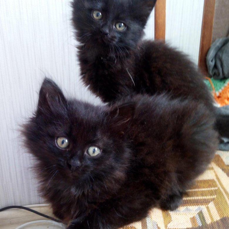 семьи фото черного пушистого котенка сожалению