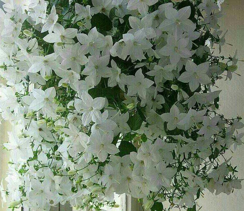 Базы, где купить цветок жених и невеста в спб