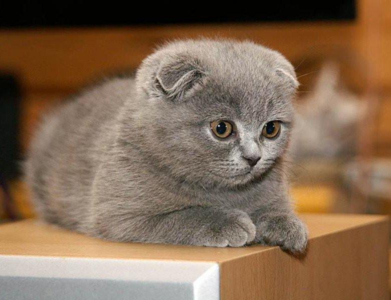Осадок мочи кошка картинки