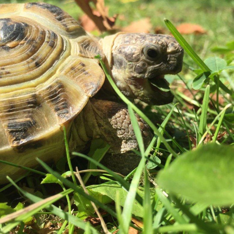 картинки среднеазиатских черепах и только пусть вся жестокость