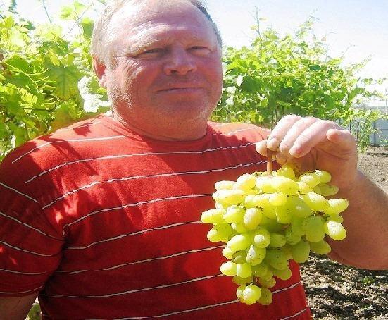 если сорта винограда с фото для ростова на дону что настанет