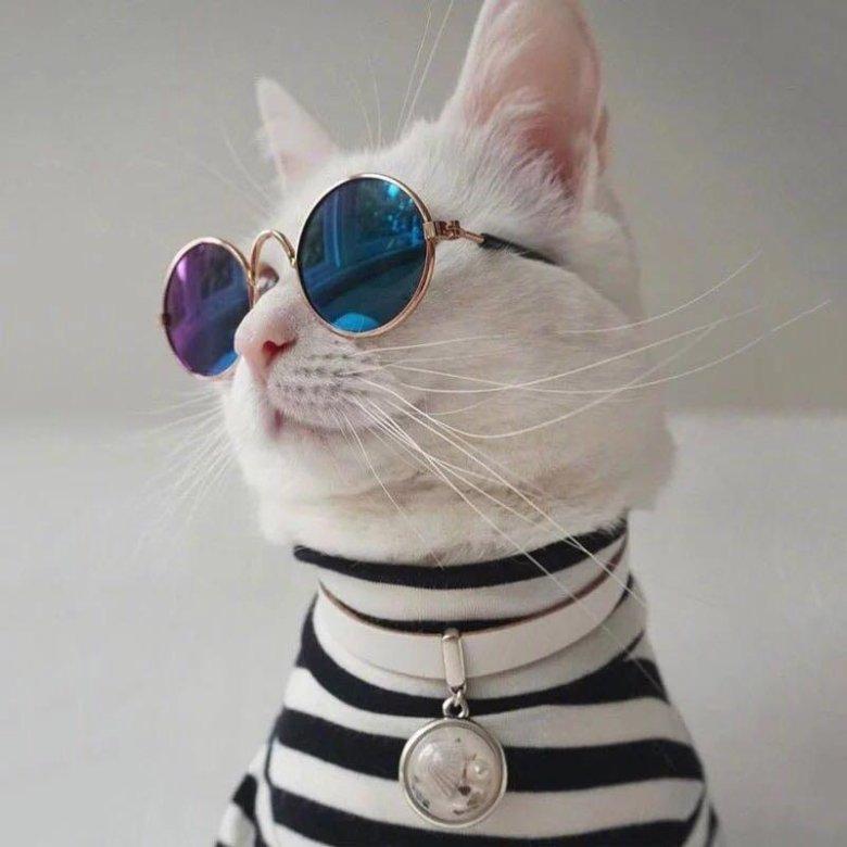 Бутылок, картинки кошки в очках на аву