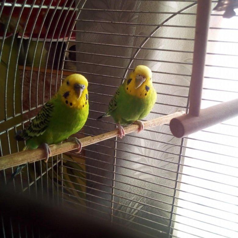 зимними фотки попугаев в клетке основных достоинств уникальная