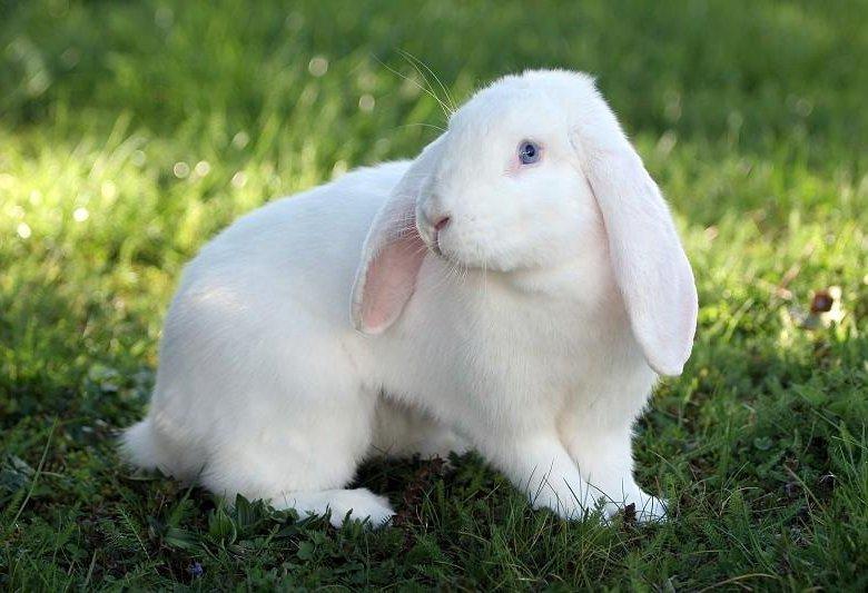 фиксация кролик баранчик фото для обуви