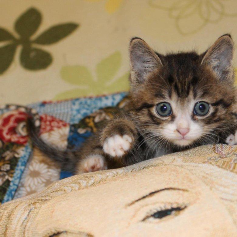 Взять котенка в хабаровске показать с фотографиями