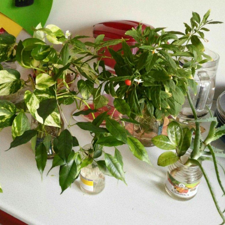 Цветов доставка, купить комнатные цветы нижний новгород