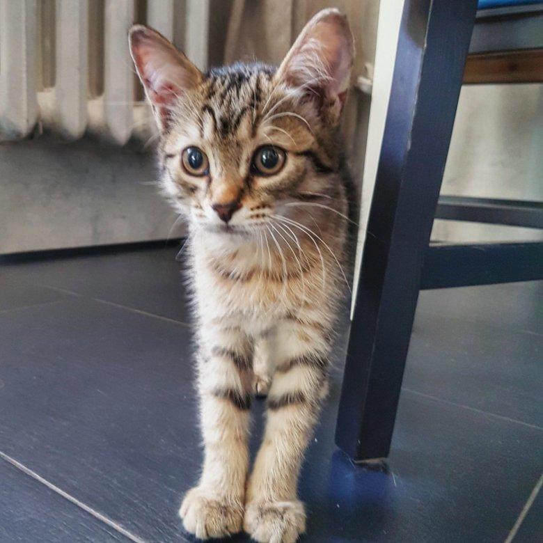 сути, является котята уфа в дар фото самурая