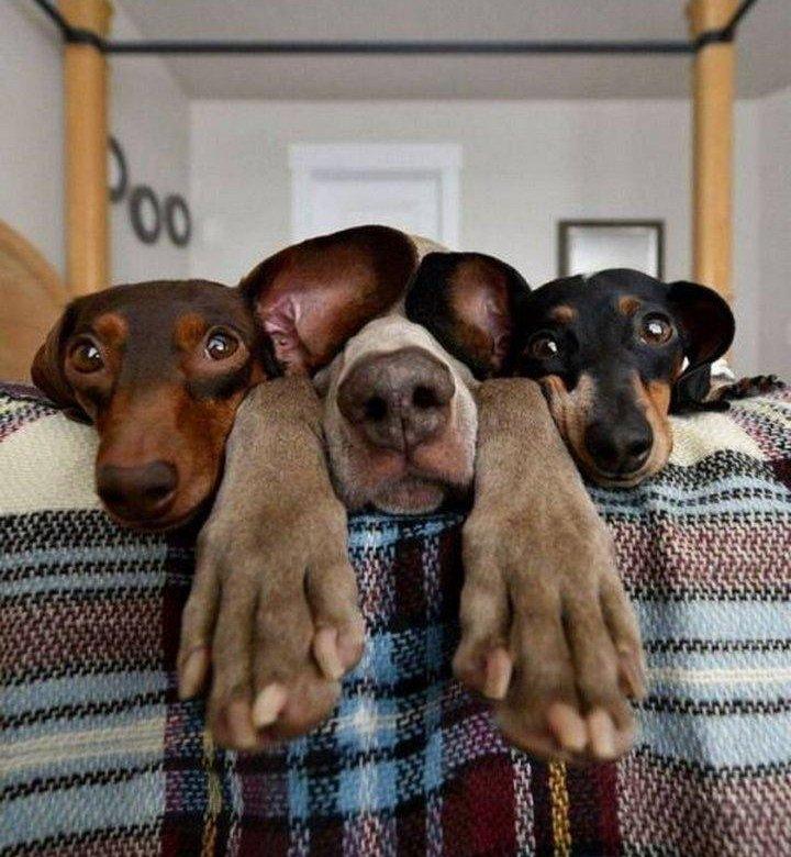 Домашние животные прикольные картинки с надписями