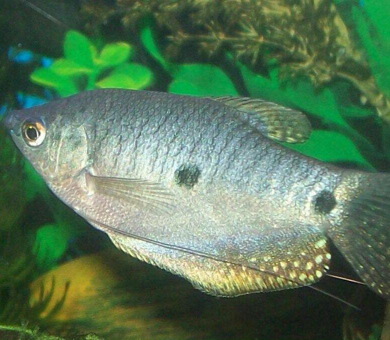 фото рыбы клиник статья