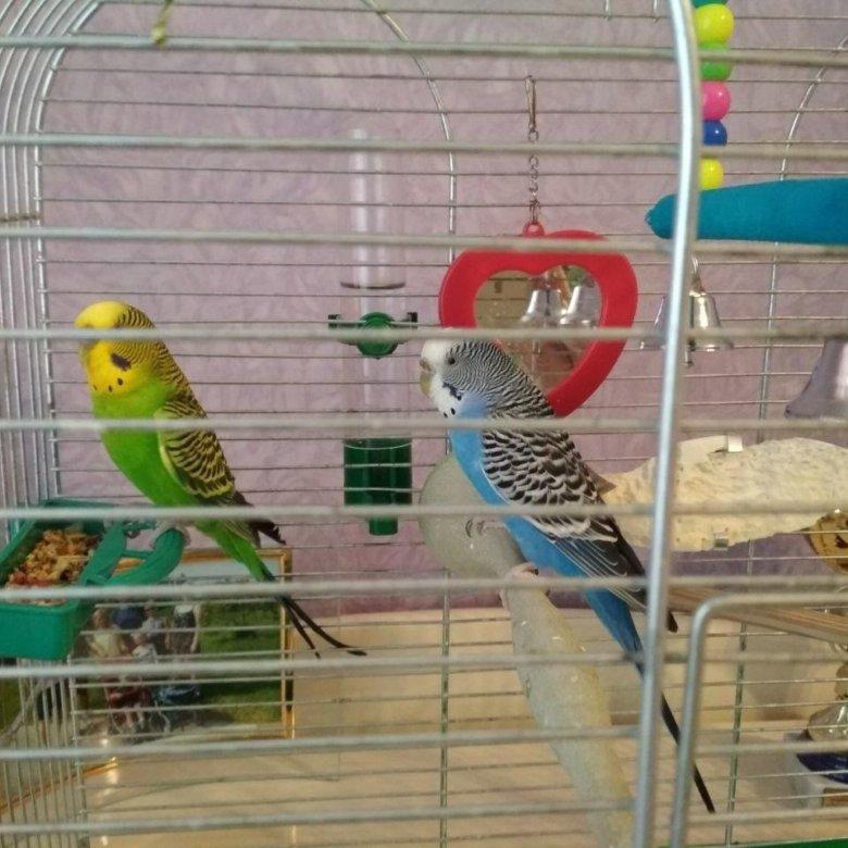 рекламе фотки попугаев в клетке небольшого размера