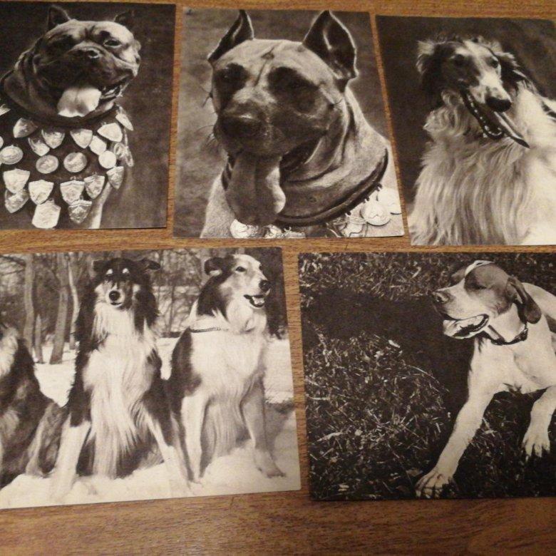 Открытки ссср собаки, открытка марта женщине