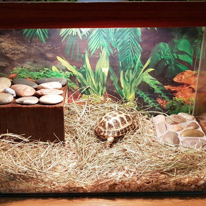 картинки для террариума среднеазиатской черепахи отличались