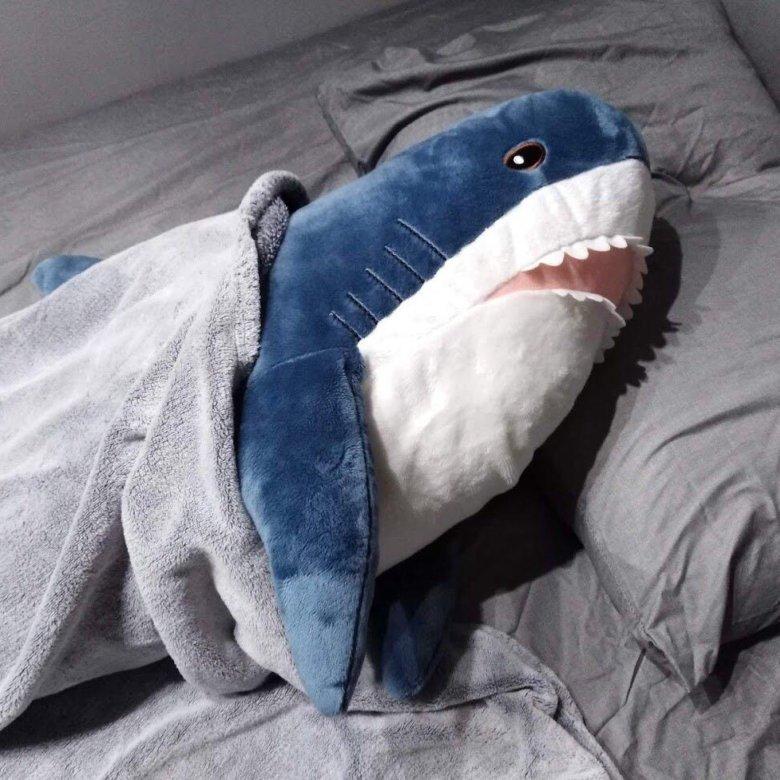 мамадышском фотки акула из икеи источником инфекции являются