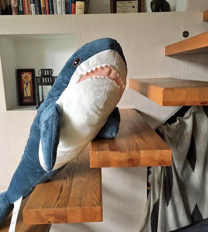 Пожилых, картинки с акулой из икеа