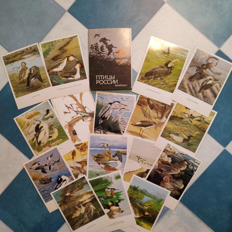 Издательства по открытками, магазинчик милоты открытки