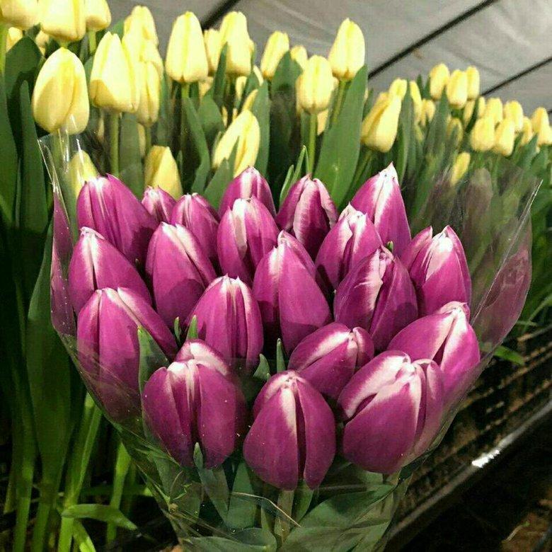 фото тюльпаны краснодар смену покупаются
