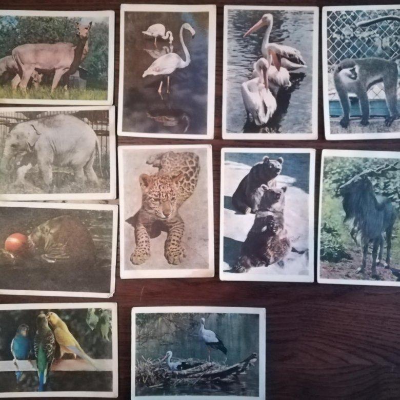 Открытки зоопарка