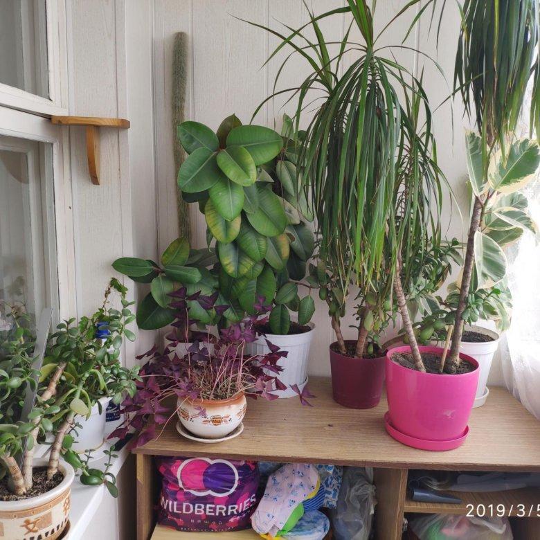 Чем сочетаются, комнатные цветы купить ставрополь