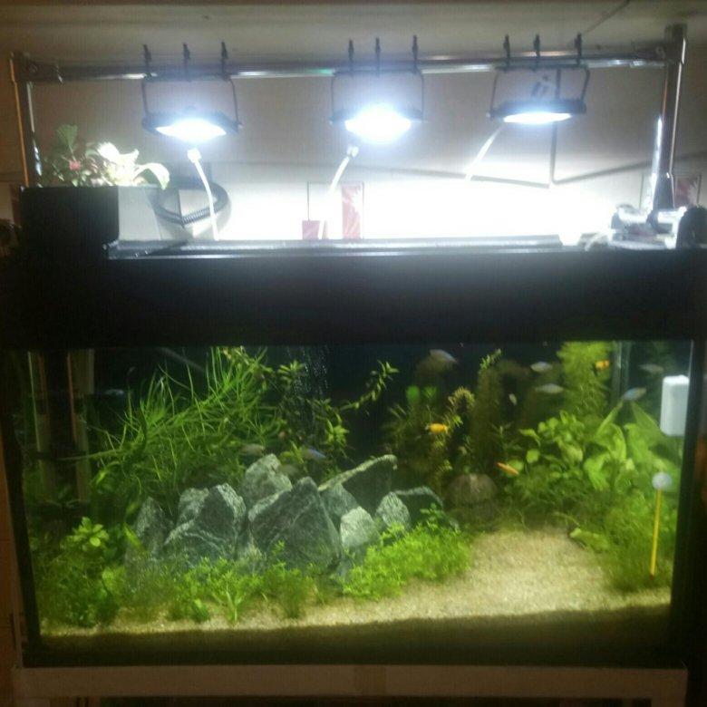 воздух и свет для аквариума фото фото цветные