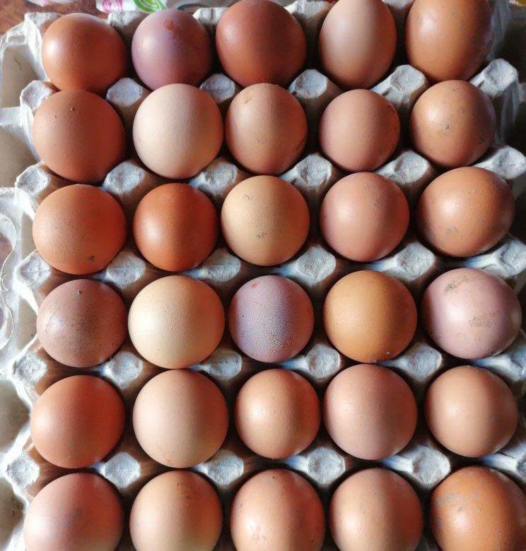 прислала нам кто поставляет яйцо в рубцовске речь