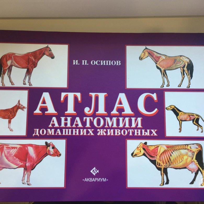 квартир анатомический атлас животных в картинках своей