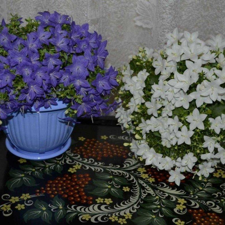 Где в челябинске купить цветок невеста жениху, для мужчин