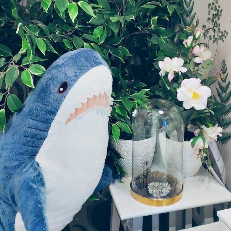 фотки акула из икеи итоге