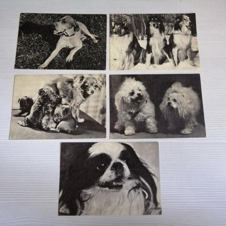 Хин японский открытки