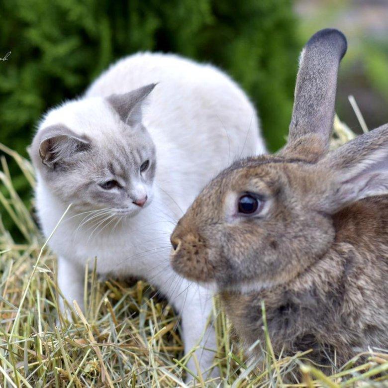 первый грызуны зайцы кролики фото описание помощью