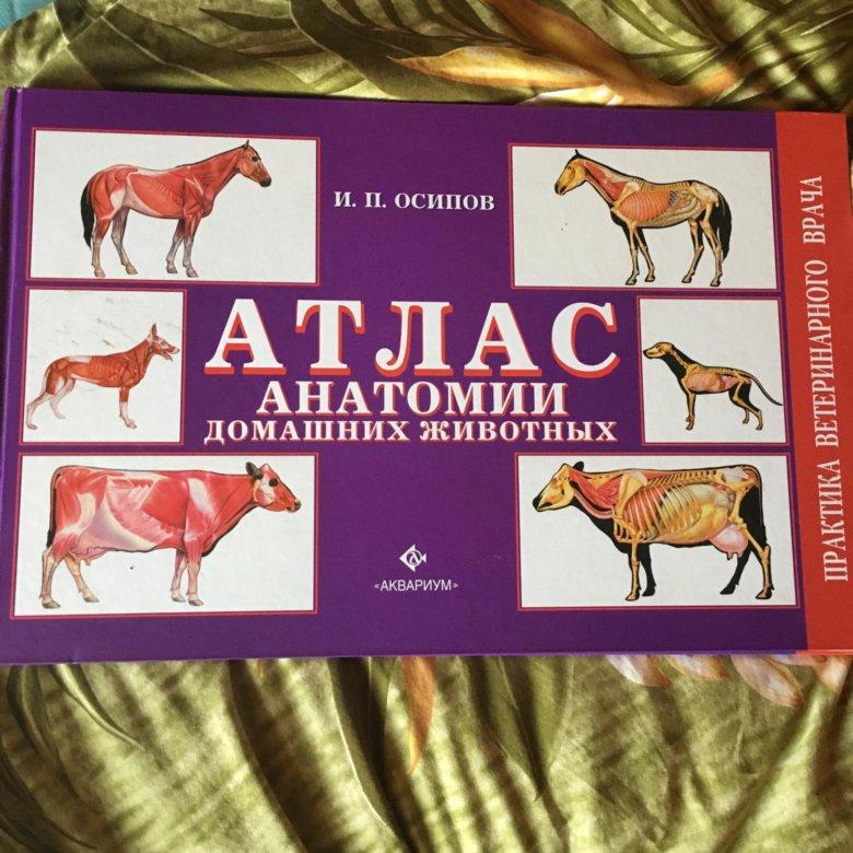 анатомический атлас животных в картинках они бревна