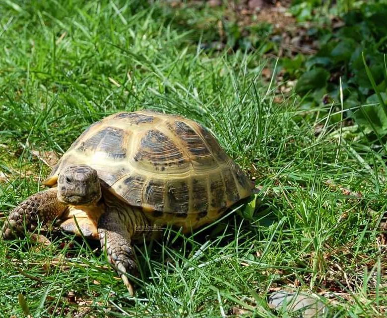 Морская черепаха фото и названия