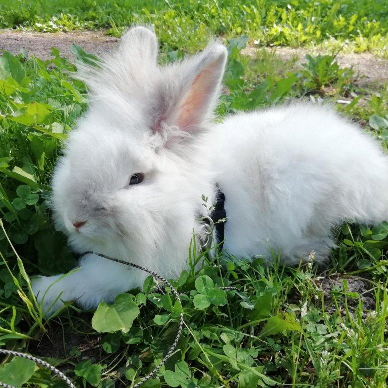 английские кролики фото