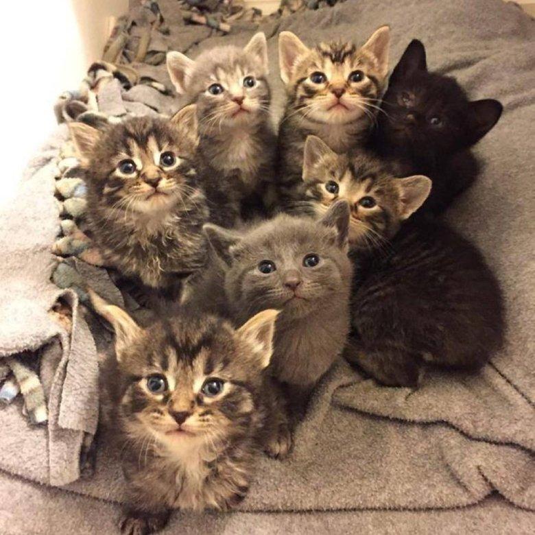 Картинка с множеством котят