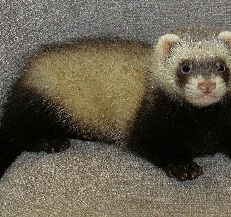 развивающие картинки фото харьков животное имеет смысл приглашать