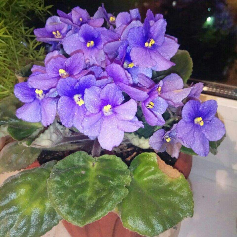 Доставка, в харькове купить цветы фиалки