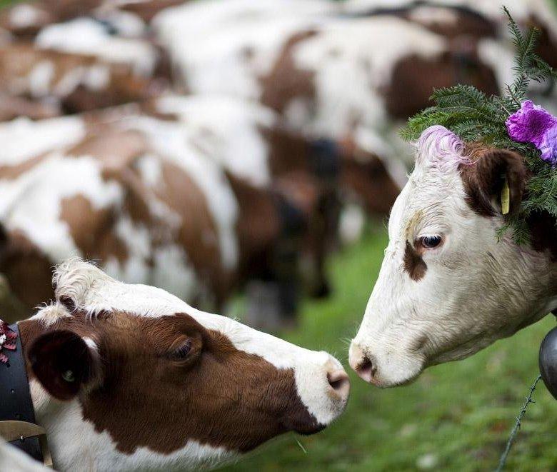 Прикольные картинки с сельскохозяйственными животными, школа тюрьма