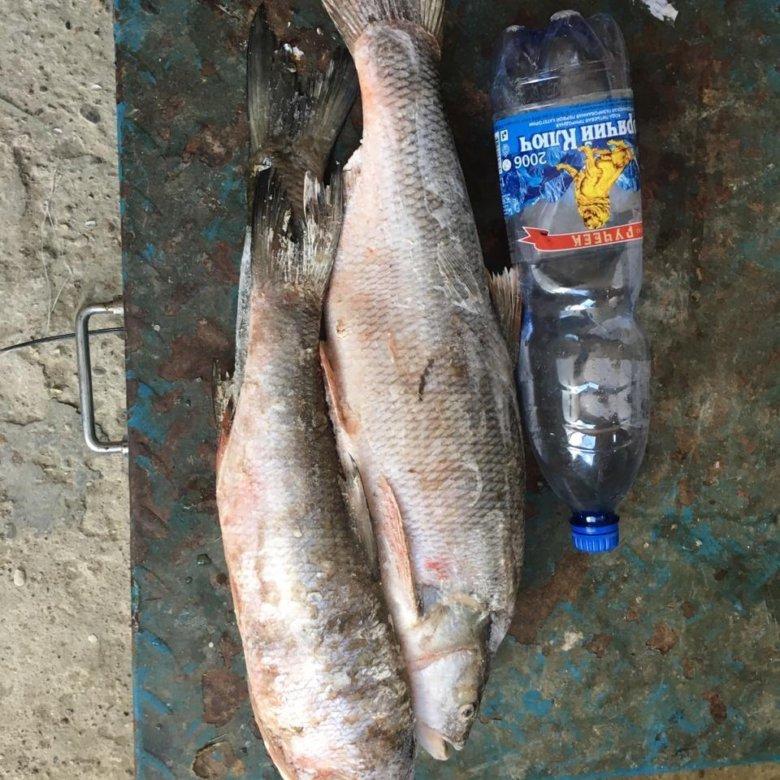 Рыбалка в славянске-на- кубани