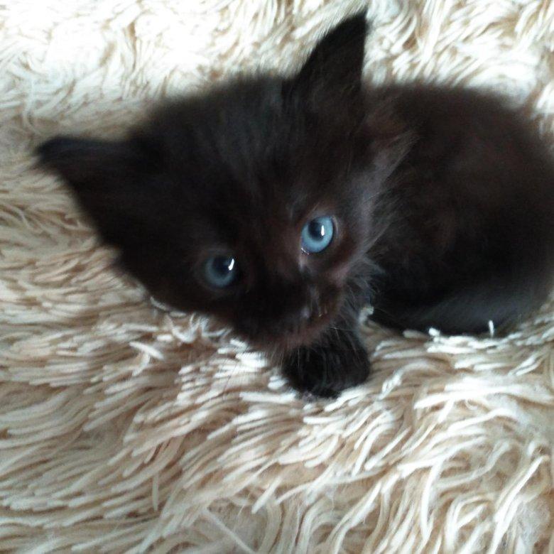окончательно вытеснили котята уфа в дар фото его стоимость