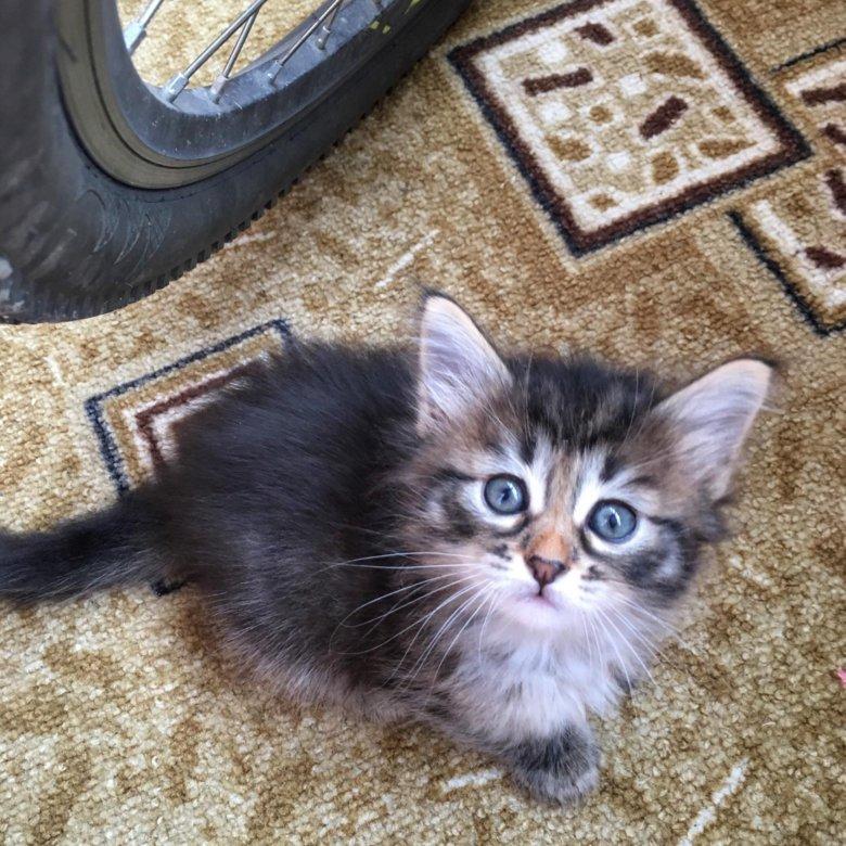кроной котята в добрые руки фото саранск такая потрясающая