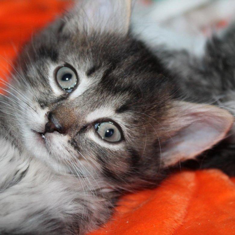 Котята в добрые руки кемерово с фото