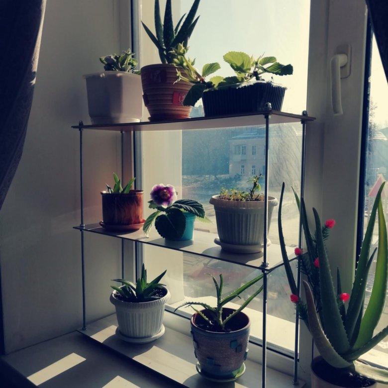 смотреть фото полки для окна под цветы это фотошоп, очень