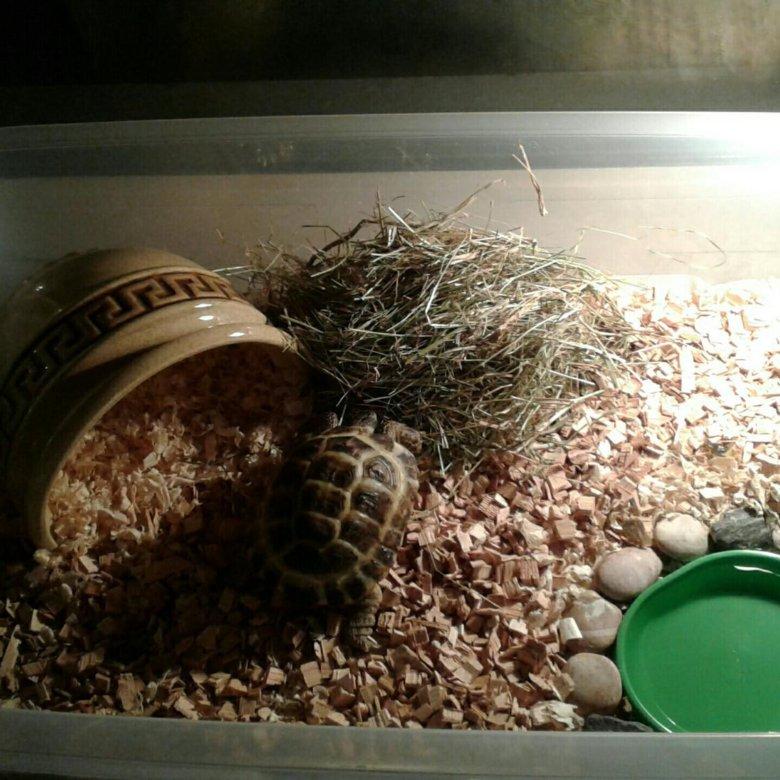 вас террариум для среднеазиатской черепахи фото так бывает, что