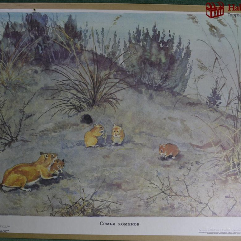 картинки из жизни диких животных николаева мешкова пожив селе поняли