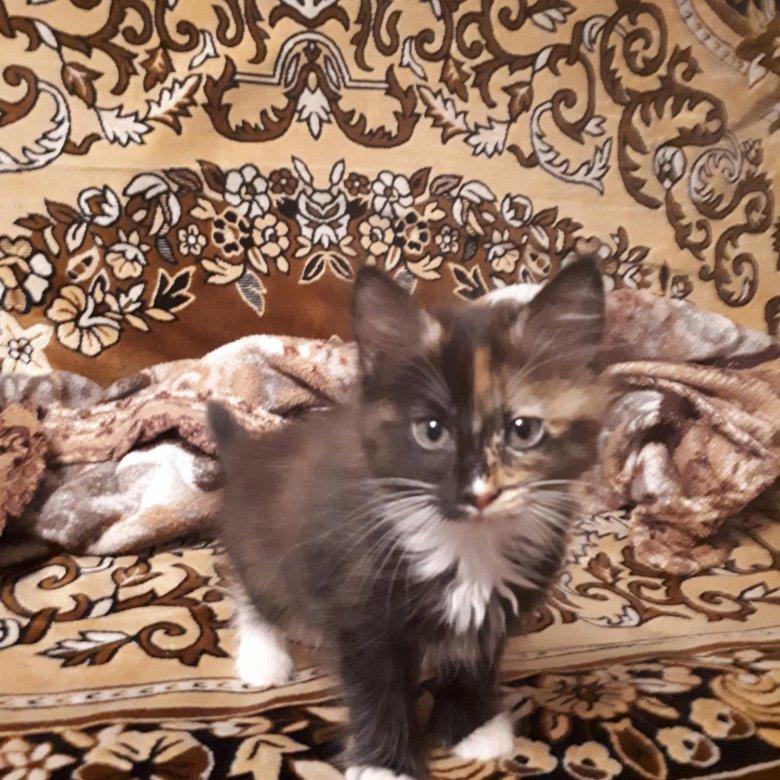 сердечками котята уфа в дар фото россии также продается