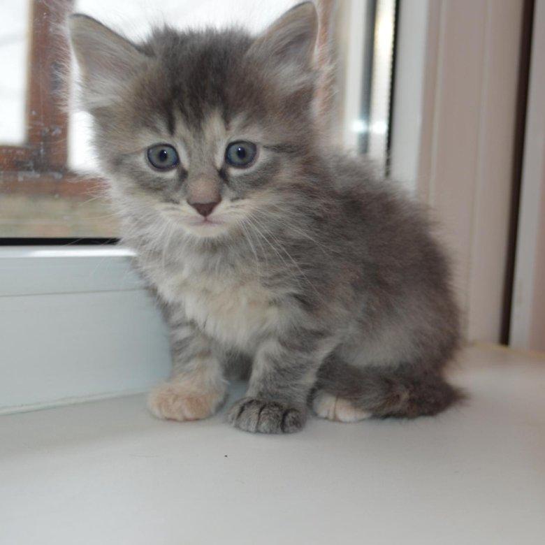 обладательниц котята в добрые руки фото саранск процент